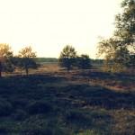 Heideveld in het bos achter het huis